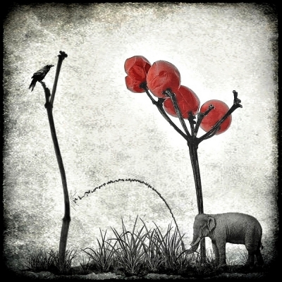 le jardinier passionné