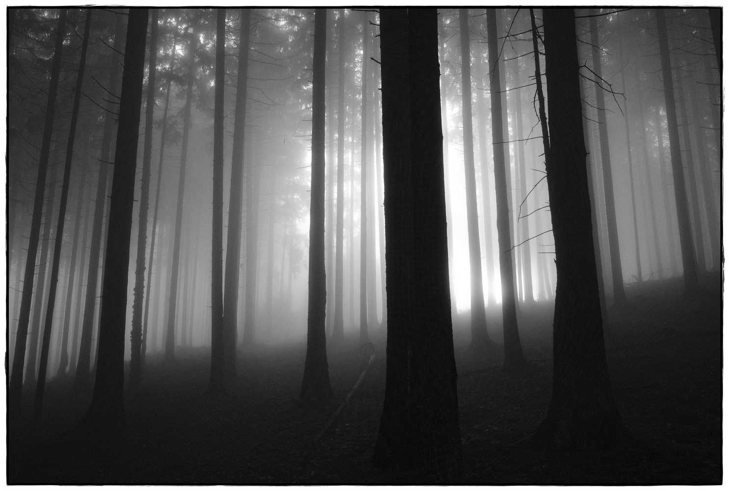 foggy forest  I