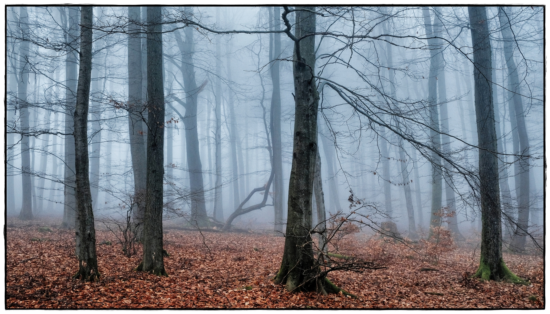 foggy forest  VII