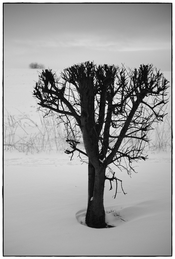 gestutzter Baum im Schnee