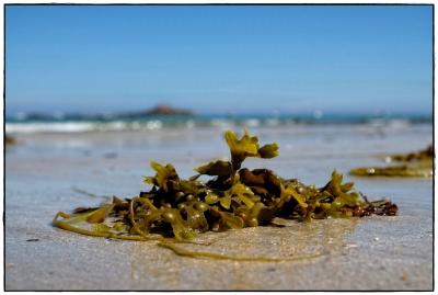 bretonischer Strand I