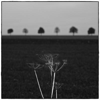six trees II