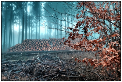 foggy forest VI