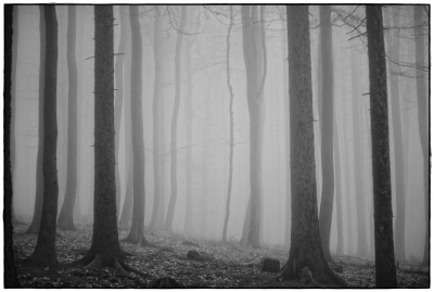 foggy forest V