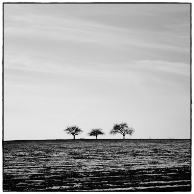 3 Trees I
