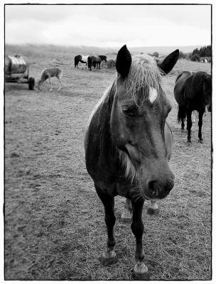 Pferd I